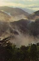 Early Morning Mists -- Great Smoky Mountains National Park