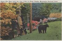 Black She Bear with her four Cubs in Great Smoky Mountains National Park