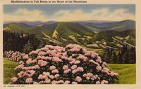 Rhododendrons in Full Bloom in the Heart of the Mountains