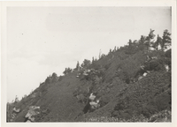 View of Myrtle Point Mt. LeConte picture taken in 1925