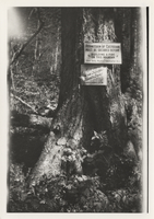Signs beside LeConte Creek Trail erected by Paul J. Adams, summer of 1925