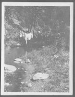 A Ford on Baskins (Bearskin Creek), mule and sled common sight