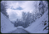Cades Cove Road, 10 Inches of Snow