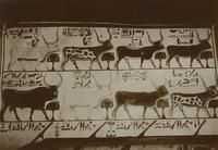 Wall Painting, Heavenly Bull and Seven Cows, Tomb of Nefertari