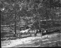 Maple Springs Camp; left to right: Mrs. Burger, W. O. Garner, Knox Burger, Karl Garner, Carl Burger, and Herman Garner and horses Tobe and Jim