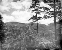 Gregory Bald, Parsons Bald with Dalton Gap shown between the two tall pine trees; taken from Chilly Spring Knob