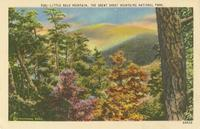 Little Bald Mountain, The Great Smoky Mountains National Park (539)