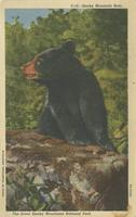Smoky Mountain Bear, The Great Smoky Mountains National Park (C-16)