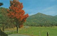 Fall Color Scene in Cades Cove - Great Smoky Mountains National Park (GS-374)