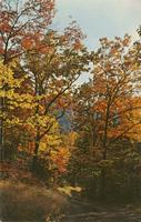 Beautiful Fall Colors - Great Smoky Mountains National Park (GS-353)