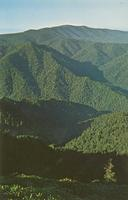 Clingmans Dome - Highest Peak in the Great Smoky Mountains National Park - Alt. 6643 Ft. (GS-405)