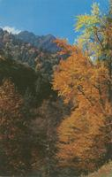 Gorgeous Fall Colors - Great Smoky Mountains National Park (GS-181)