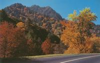 The Chimney Tops in Fall Colors seen from U. S. 441 - Great Smoky Mountains National Park (GS-182)