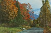 Fall Color Scene - Great Smoky Mountains National Park (GS-352)