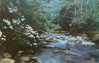 Laurel Creek - Great Smoky Mountains National Park (GS-204)