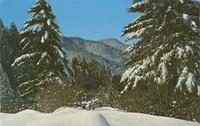 Winter Scene near Newfound Gap - Great Smoky Mountains National Park (GS-415)