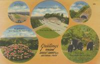 Parking Area at Clingman's Dome, Rhododendron, Parking Area at Newfound Gap, Tunnel and the Chimney Tops, Newfound Gap Highway, Black Bears, Greetings from Great Smoky Mt.s National Park (279)