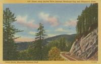 Scene along Skyline Drive between Newfound Gap and Clingman's Dome Great Smoky Mountains National Park (516)
