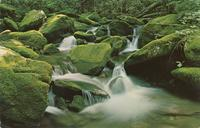 Mountain Stream and Moss Covered Rocks - Great Smoky Mountains National PArk (GS-275)