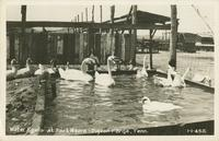Water Fowls at Fort Weare - Pigeon Forge, Tenn. (1-1-452)
