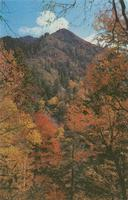 Fall Color Scene in the Heart of the Great Smoky Mountains National Park (GS-178)
