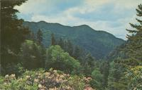 Scene from the Transmountain Highway U. S. 441, Great Smoky Mountains National Park looking toward Mt. Mingus (GS-92)