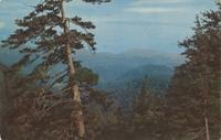 View from Clingman's Dome Road at Indian Gap Great Smoky Mountains National Park (K-130)