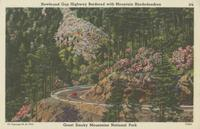 Newfound Gap Highway Bordered with Mountains Rhododendron Great Smoky Mountains National Park (276)