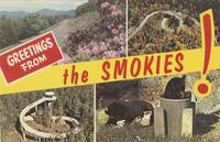 Greetings from the Smokies!