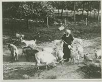 Goats with Mrs. John (Harriet) Morgan