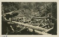 Along the trail from Porters Flats to Dry Sluice Gap after a cloudburst July 29-1928 (image number 143)