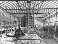 Flower House at the Mountain Branch of the National Home for Disabled Volunteer Soldiers