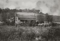 Tobacco drying in Washington County, Tennessee