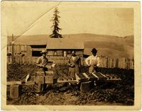 Strawberry Pickers in East Tennessee