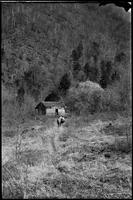 Rare picture of little Cabin standing in early years near trail to Porters Creek below the barn. Notice open field - now overgrown. Special
